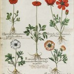 Coloured drawing of various plants with flowers.