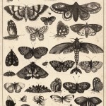 Etching of butterflies and other insects.